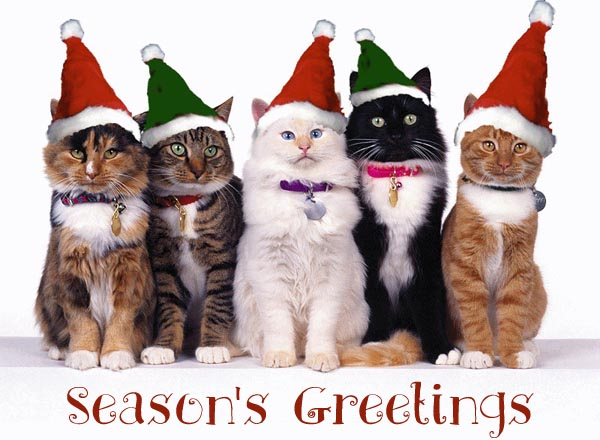 Delightful Funny Cat Christmas Cards