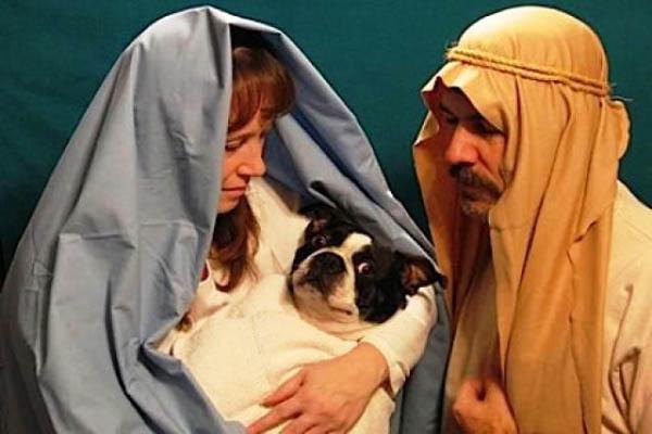 funny-dog-christmas-cards