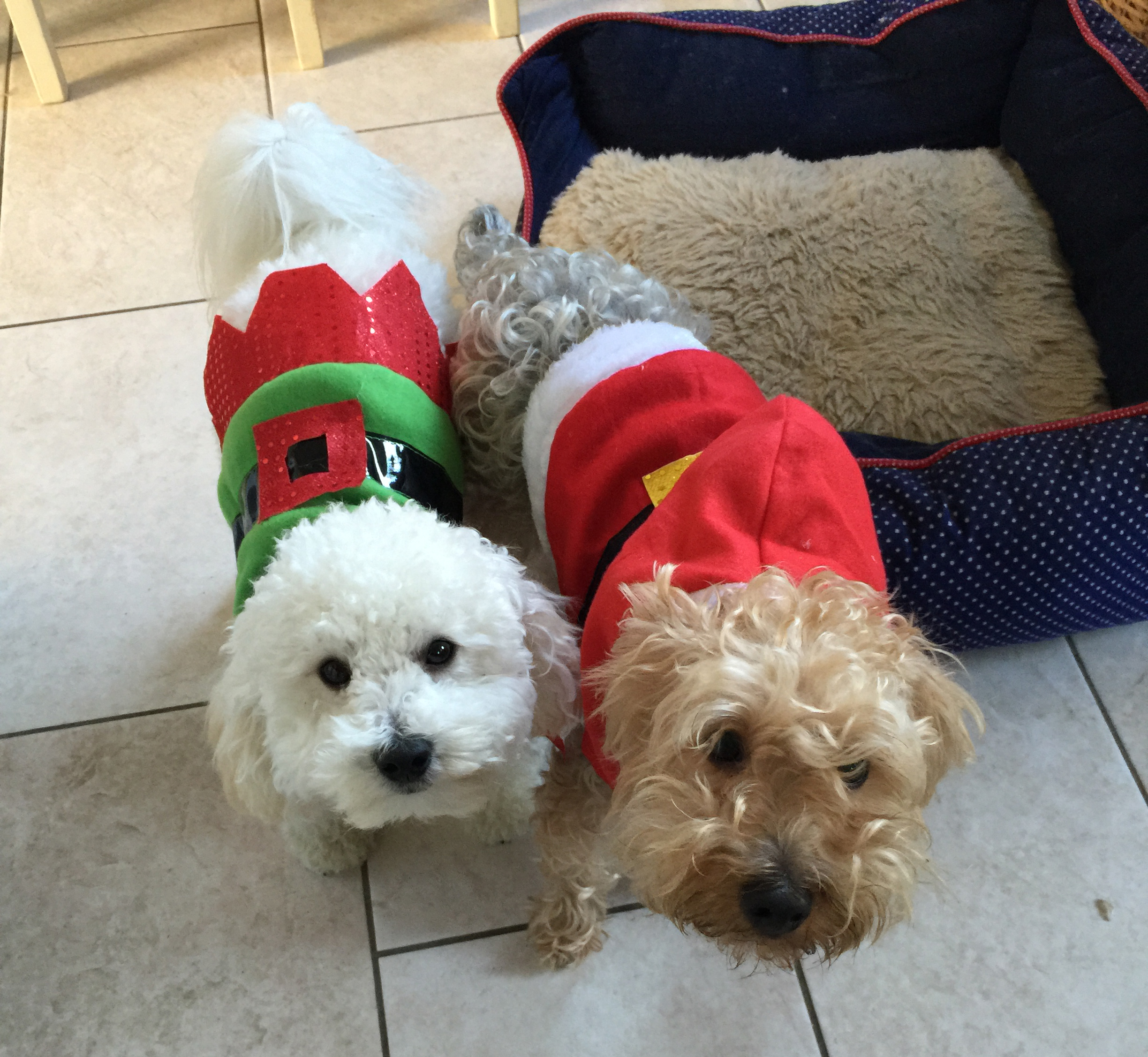 funny-christmas-jumpers1
