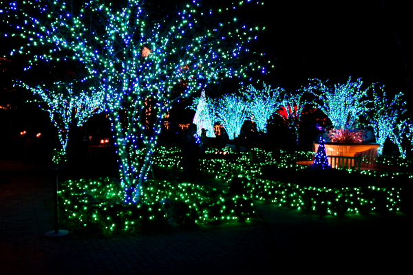 Where to go on a christmas day check out our top places christmas celebration all about for Botanical gardens atlanta lights