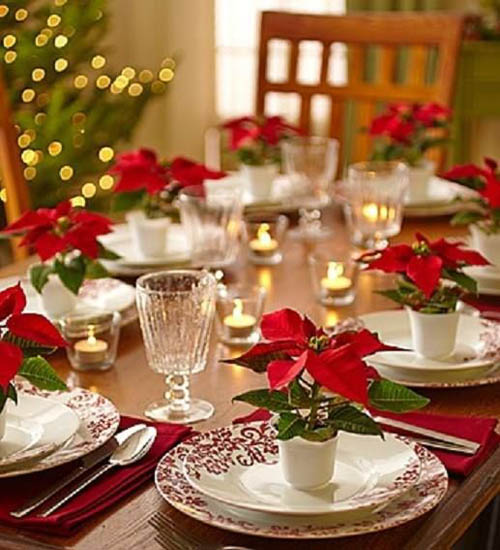 Go For The Seasonal Flower Displays If You Live In A Temperate Climate Like Poinsettias They Are Popular Holiday Decorations Here Poinsettia Flowers