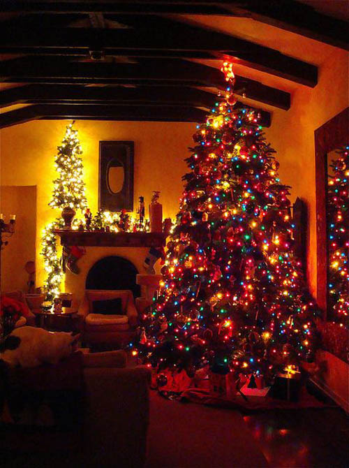 most-beautiful-christmas-trees-39