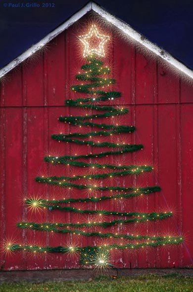 outdoor-christmas-tree-ideas