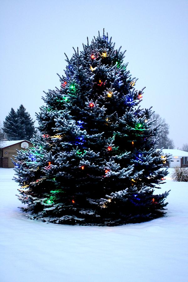 outdoor christmas tree 25 - Outdoor Christmas Trees
