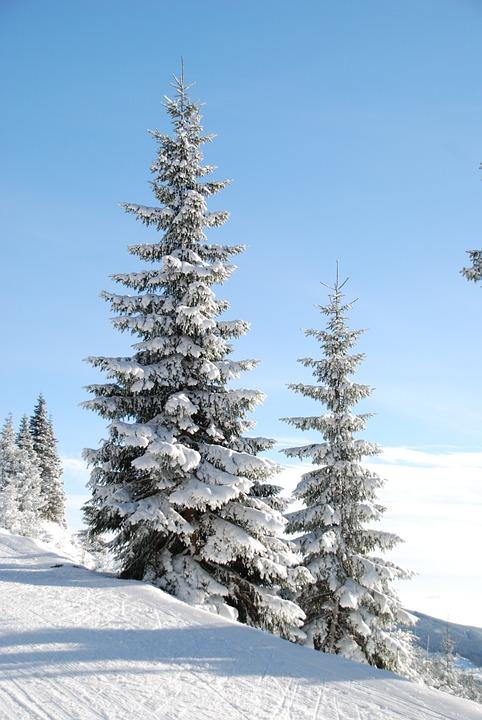 Outdoor Christmas Tree (31)