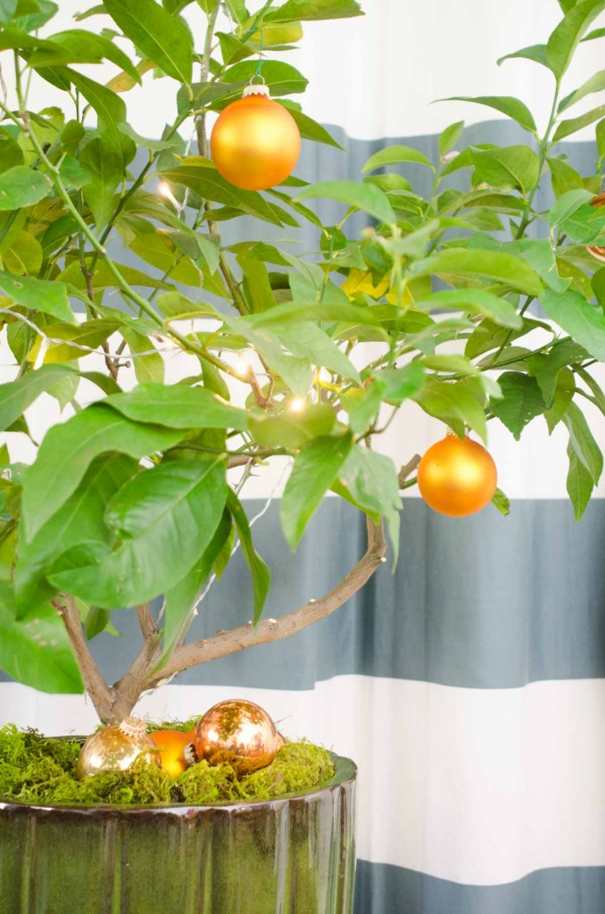 30 Beautiful Citrus Christmas Decoration Ideas Christmas Celebration All About Christmas