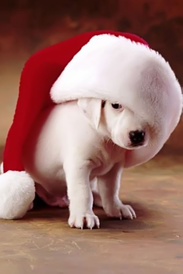 christmas-gift-ideas-for-pets