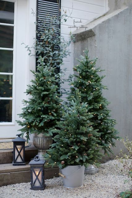 30 Stunning Potted Christmas Tree Decoration Ideas Christmas