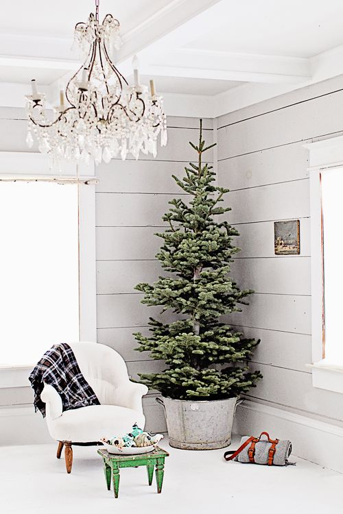 a classy look - Potted Christmas Tree