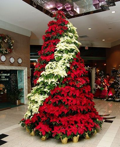 this isnt that typical christmas tree you can find elsewhere this is the timeless poinsettia indoor or outdoor the white and red poinsettia arrangement